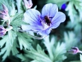 Art by Nicole Kudera, Blue Bee