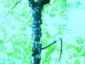 Art by Nicole Kudera, Blue Tree