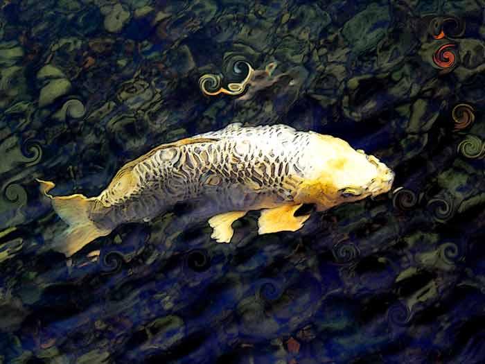 Art by Nicole Kudera, Golden Koi