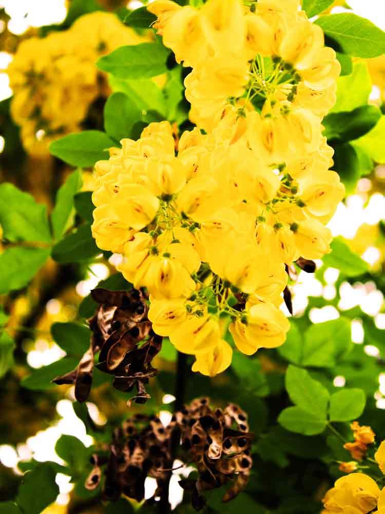 Art by Nicole Kudera, Yellow Flowers