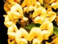 Art by Nicole Kudera, Golden Flowers