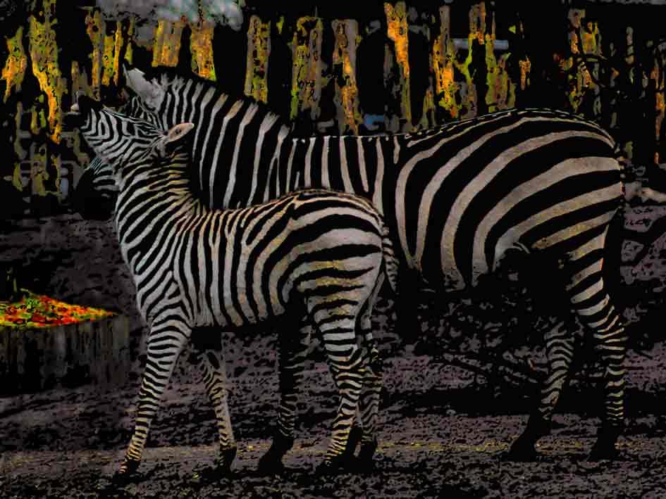 Art by Nicole Kudera, Zebra