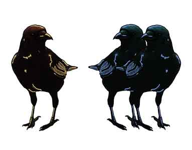 Birds, original art by Nicole Kudera