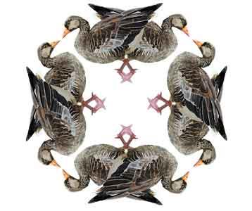 Goose Circle, original art by Nicole Kudera