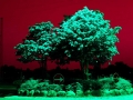 Art by Nicole Kudera, Red Tree